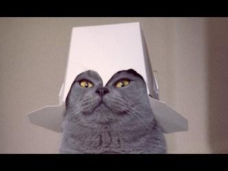 Box Fan de chats